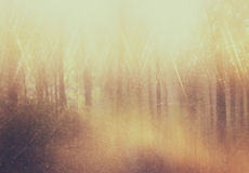 Background image of light burst among trees. image is retro filtered instagram style Stock Photo
