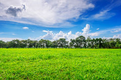 Background image of lush grass field under blue sky Royalty Free Stock Images