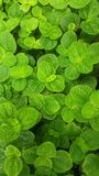 Background image , mint, and patterns of green leaf stock image
