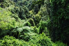Native New Zealand Forest. Background image of a native New Zealand Forest stock photography