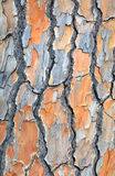 Background image od tree bark Stock Image