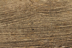 Background image of old wood from nature. Background image of old wood from nature Stock Image