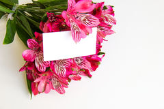 Alstroemeria flowers Stock Photography