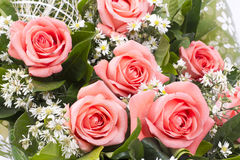 Background image of pink roses Royalty Free Stock Photos