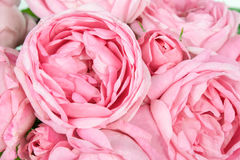 Background image of pink roses Royalty Free Stock Photography