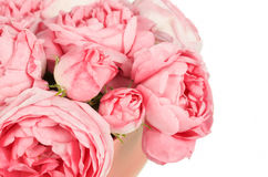 Background image of pink roses Royalty Free Stock Photo