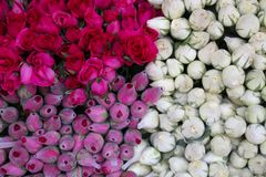Background image of pink and white roses. Background Royalty Free Stock Image