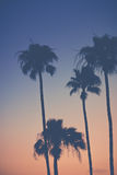 Purple Orange Sunset Sky with Palm Trees. Background Image Purple Orange Sky at Sunset with Palm Trees Royalty Free Stock Photography