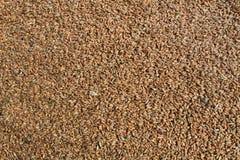 Background image of wheat Royalty Free Stock Photo