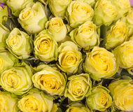 Background image of yellow roses Stock Photo