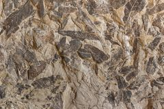Imprint of fossil prehistoric plant foliage on stone Stock Photos