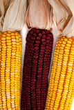 Background of indian corn Stock Photos