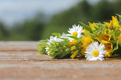 Background for an inscription. Wild flowers on a wooden table in Stock Photography