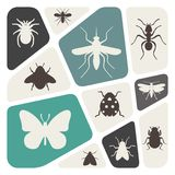 Background with insects Stock Photo