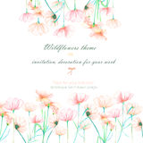 Background, invitation card, template postcard with the tender pink cosmos flowers, hand drawn on a white background Stock Photos