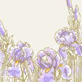 Background with iris flowers Stock Images