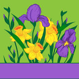 Iris and narcissus. Background with iris and narcissus Stock Photos