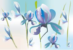 Background with irises, Stock Photo