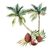 background isolated palm tree white акварель Стоковая Фотография RF
