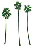 background isolated palm tree white Стоковые Фото