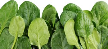 Young Spinach Leaves Close-up - Isolated. Background isolated sorrel green white backgrounds closeup stock photo
