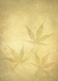 Background Japanese Maple Leafs Royalty Free Stock Images
