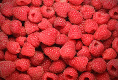 Background of  juicy raspberries Royalty Free Stock Photos
