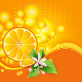 Background with juicy slices of orange fruit. Abstract background with juicy slices of orange fruit and flowers royalty free illustration