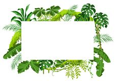 Background with jungle plants. Tropical leaves. Woody natural rainforest stock illustration