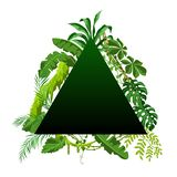Background with jungle plants. Tropical leaves. Woody natural rainforest vector illustration