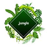 Background with jungle plants. Tropical leaves. Woody natural rainforest royalty free illustration
