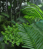 Background jungle of tropical plants Stock Photography
