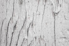 Background with knots texture severed tree Royalty Free Stock Photos