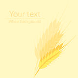 Background for a label or a poster with a picture of wheat ears. Yellow background for a label or a poster with a picture of wheat ears Stock Photography