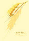 Background for a label or a poster with a picture of wheat ears. Yellow background for a label or a poster with a picture of wheat ears Stock Photos