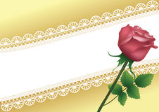 Background with lace and rose. Royalty Free Stock Images