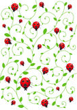 background with ladybirds Royalty Free Stock Photos