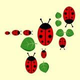 Background with ladybirds Stock Image