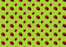 Background with ladybirds Stock Photos