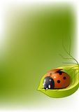 Background with ladybug Royalty Free Stock Image