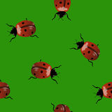 Background with ladybugs Royalty Free Stock Image