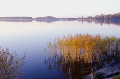 Background of lake evening landscape. Bulrush grow Stock Photography
