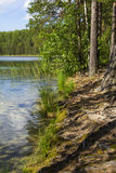 Background landscape beautiful view of the protected lake in pine forest Royalty Free Stock Image