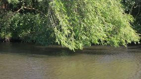 Background landscape river. Landscape river nature, slowly flowing water stock video footage