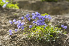 Background landscape shrub purple bell flowers Stock Photo