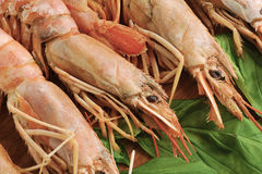 Background of the large prawns and Basil leaves Stock Photography