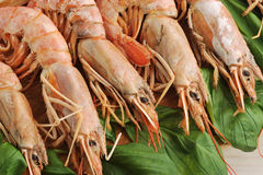 Background of the large prawns and Basil leaves Royalty Free Stock Image