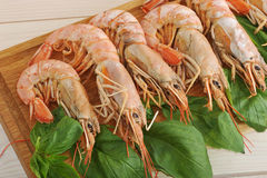 Background of the large prawns and Basil leaves Stock Photos