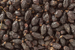 Background of a large quantity of dried rosehip berries and spoo Royalty Free Stock Image