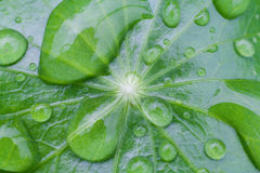 Drop on green leaf royalty free stock photo